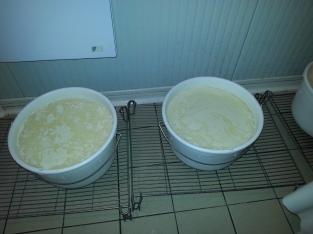 Le lait entrain de cailler